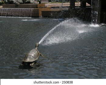Fountain turle