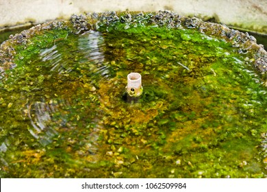 Fountain turned off with Sludge and moss in standing water