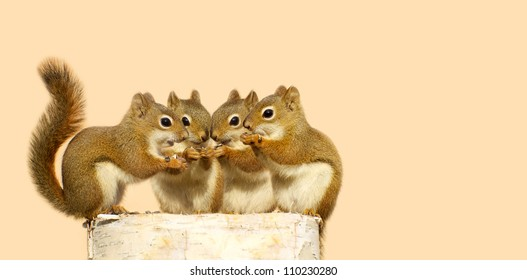 Four baby squirrels on a birch log sharing some sunflower seeds, with copy space. Part of a  series.