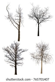 four bare trees isolated on white background