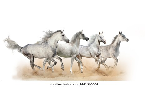 Four beautiful arabian horses running in dust, isolated