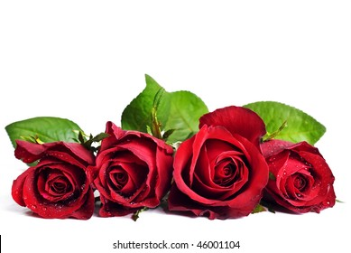 Four beautiful red roses on a white background with space for text
