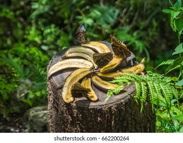 Four butterflies eating sweet banana