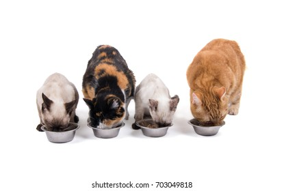 Four cats, adults and kittens, eating out of silver bowls, on white