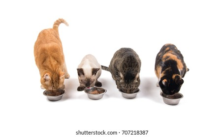 Four cats in different colors and sizes eating out of bowls, on white background