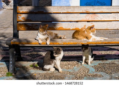 Four cats on a bench