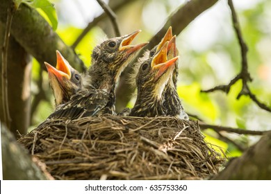 Four chicks in a nest on a tree branch in spring in sunlight