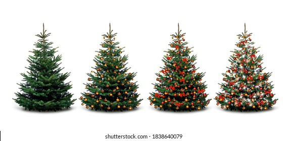 Four Christmas trees - unadorned and decorated