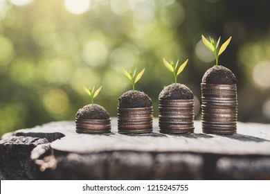 Four coin stacked on old stumps and seedlings are growing on top, the concept of financial growth.