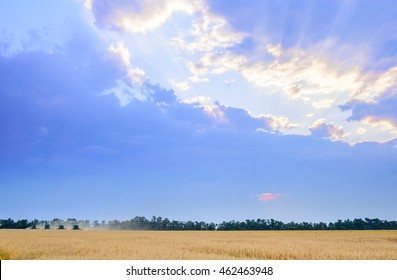 Four Combine Harvesters Harvesting Wheat in the Field under Beautiful Sunset Sky