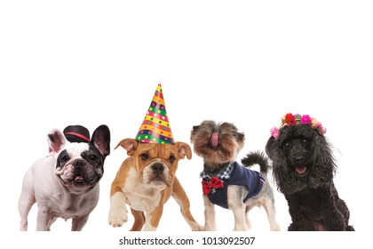four cute little dogs ready for a party on white background