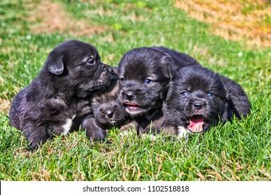 Four cute regular common puppies in the garden