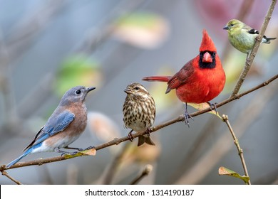 Four Different Songbirds Perched on Branch