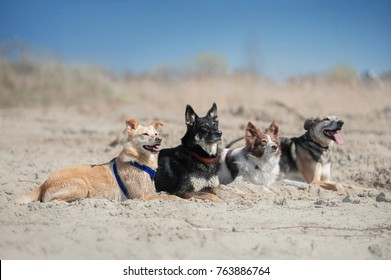 Four dogs lays on the sand at the beach