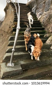 Four dogs racing to the beach