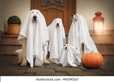 Four dogs sit as a ghost in front of the door