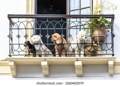 Four dogs sitting on a balcony and looking on the street.