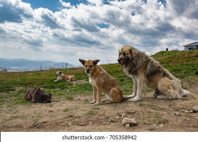 Four dogs sitting and relaxing in nature with cloudy sky