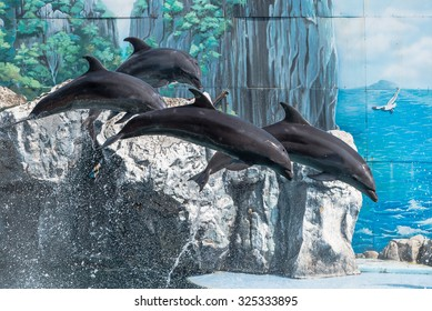 Four dolphins jumped out of the water and hovered in the air against a bright blue painted wall water park