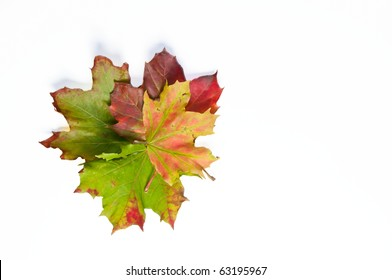 Four dried autumn leaves in different colors on white isolating background