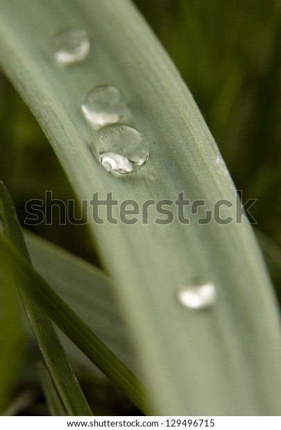 four drops on a blade of grass