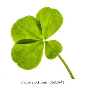 four element clover leaf isolated on white
