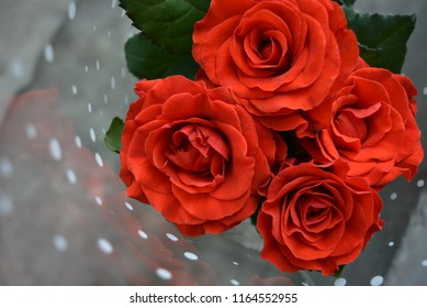Four even beautiful bright red buds of flowered roses on a background of transparent film with white peas