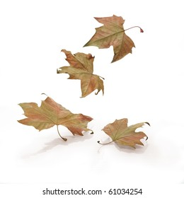 Four falling leaves on white background
