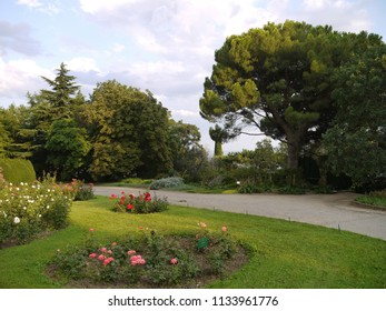 four flower beds with roses in the botanical garden against the background of tall trees