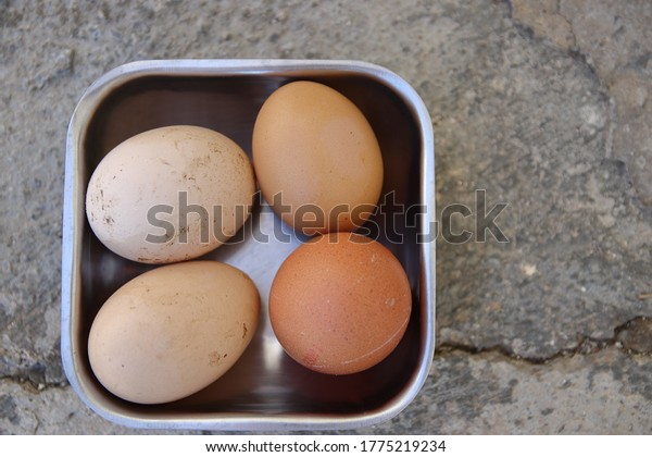 four-freshly-colected-eggs-bowl-600w-177