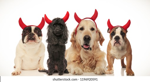 four funny little devil dogs celebrating halloween, collage image