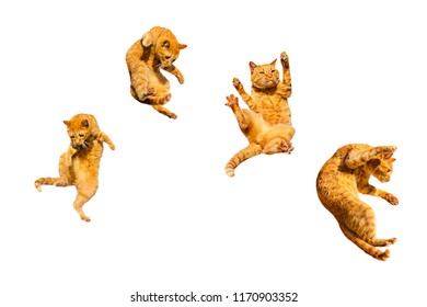 Four ginger flying cats isolated on a white background.