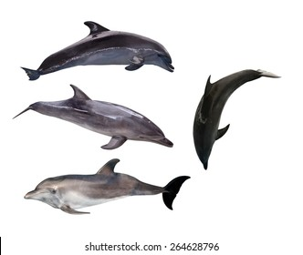 four grey dolphins isolated on white background