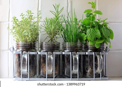Four Herbs Thyme, Rosemary, Chives And Mint Growing In Glass Jars Sat On A Kitchen Window Sill.