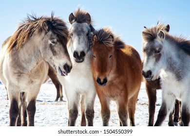 Four horses in snowy field
