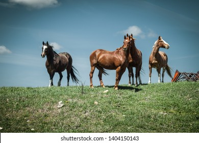 Four horses stand on a grassy hill against a blue sky.