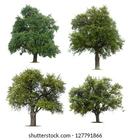 Four isolated trees against a white background