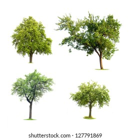 Four isolated trees ont a white background