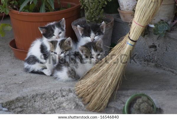 four kitten hiding over the broom