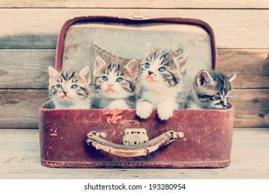 Four kittens in retro suitcase on a wooden background