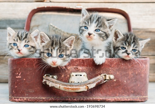 Four kittens are sitting in vintage suitcase on a wooden background