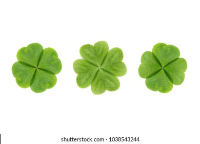four leaf clover abstract or good luck clover on white background