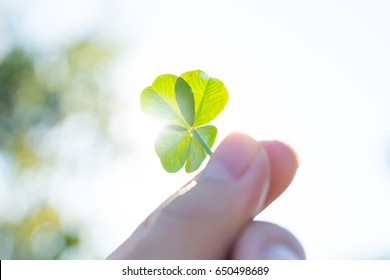 Four leaf clover and blue sky