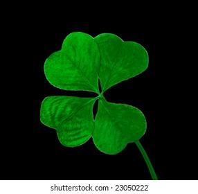 Four leaf clover on black background