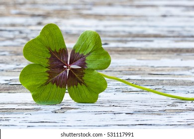 four leaf clover on wood, copy space