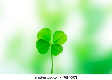 Four leaves, clover
