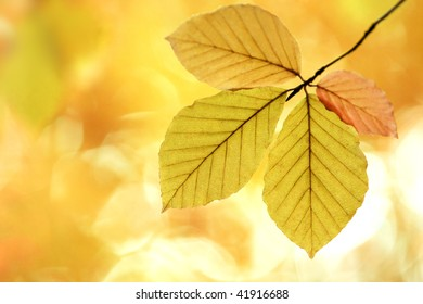 Four leaves in different shades of autumn colors