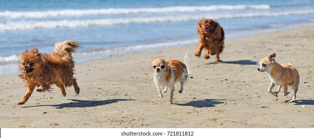 four little dogs running on the beach