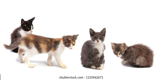Four little kittens on a white background