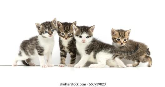 four little kittens on white background
